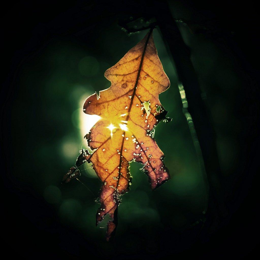 Autumn Magic IIII