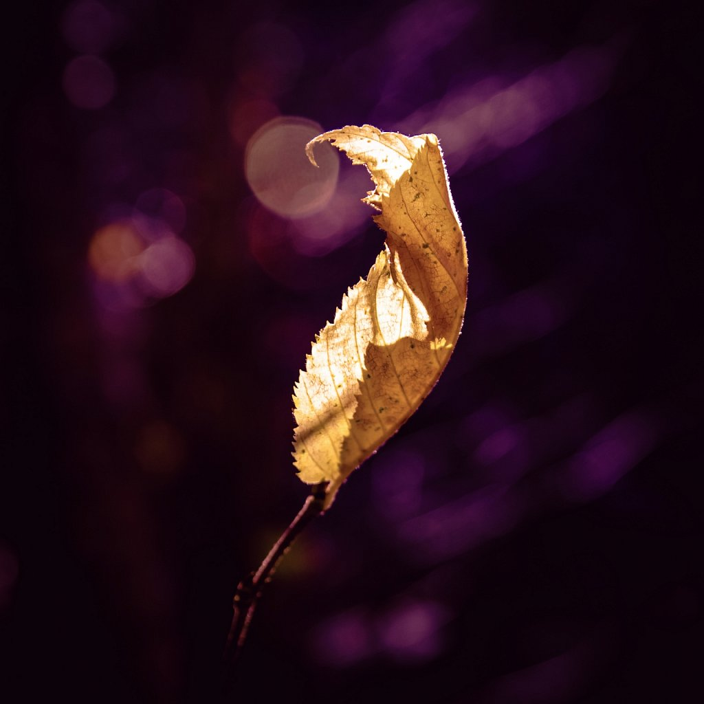 Autumn Magic III